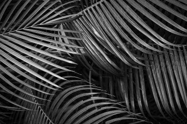 Vertical Palm Fronds